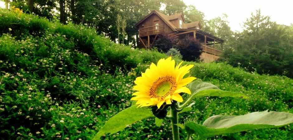 Cabins in Eureka Springs - Mountain Mist Family Log Cabin
